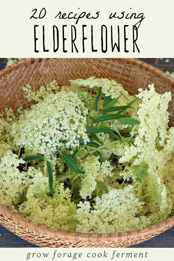 A basket of freshly foraged elderflower.