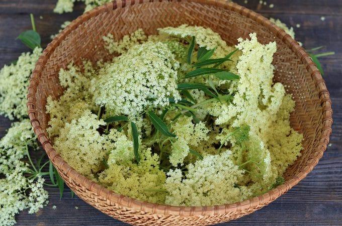 20+ Elderflower Recipes: cordial, liqueur, tea, jelly, cake + more!
