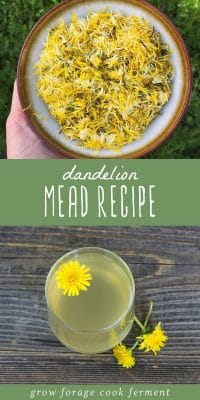A bowl of dried dandelion flowers, and a glass of dandelion mead on a wood table.