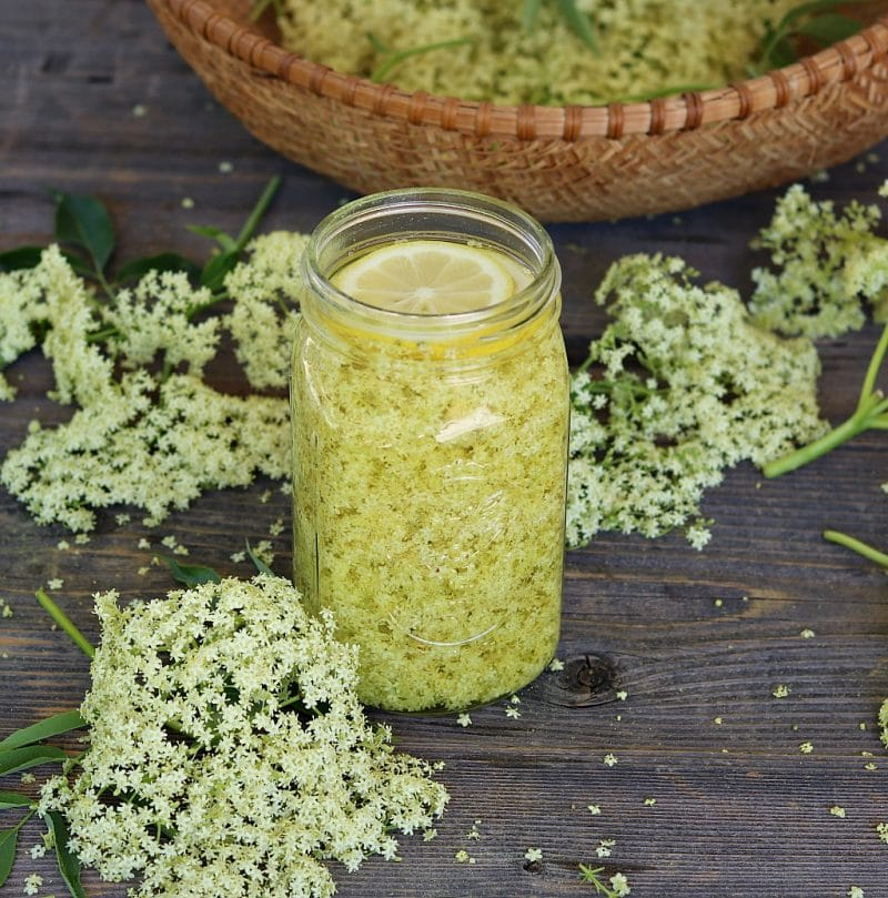 a quart jar full of elderflower liqueur in the making