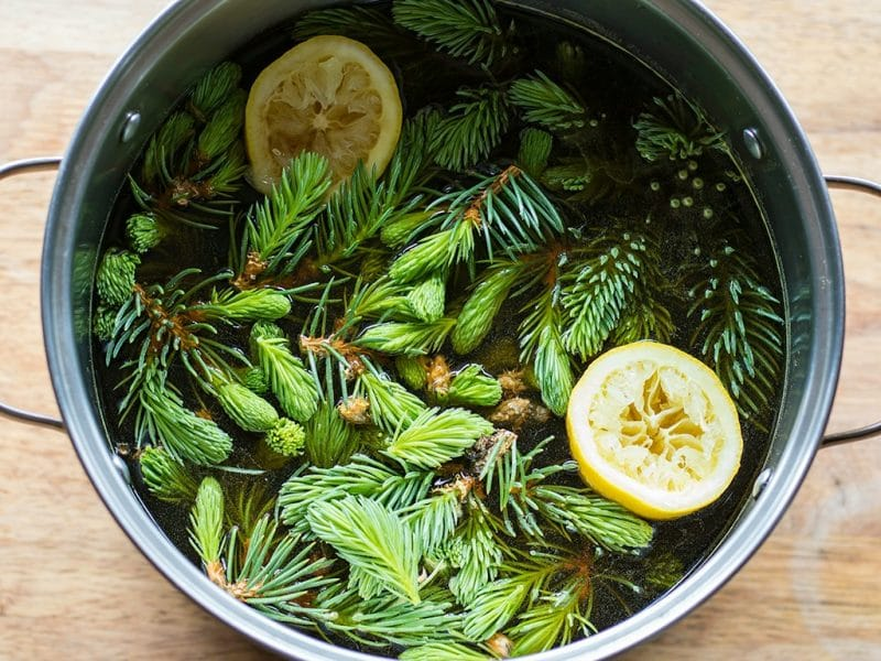 a pot of fresh foraged spruce tips and lemon to make beer