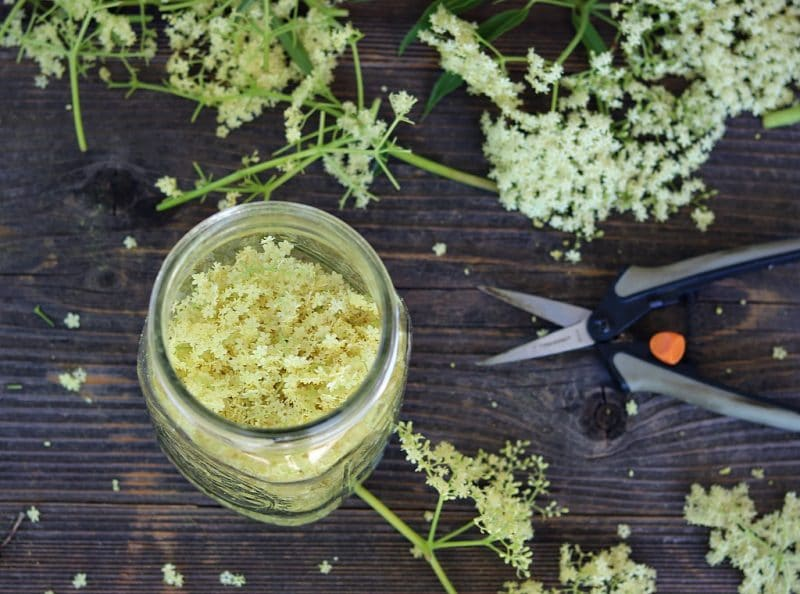 a table with a jar of elderflowers and pruners