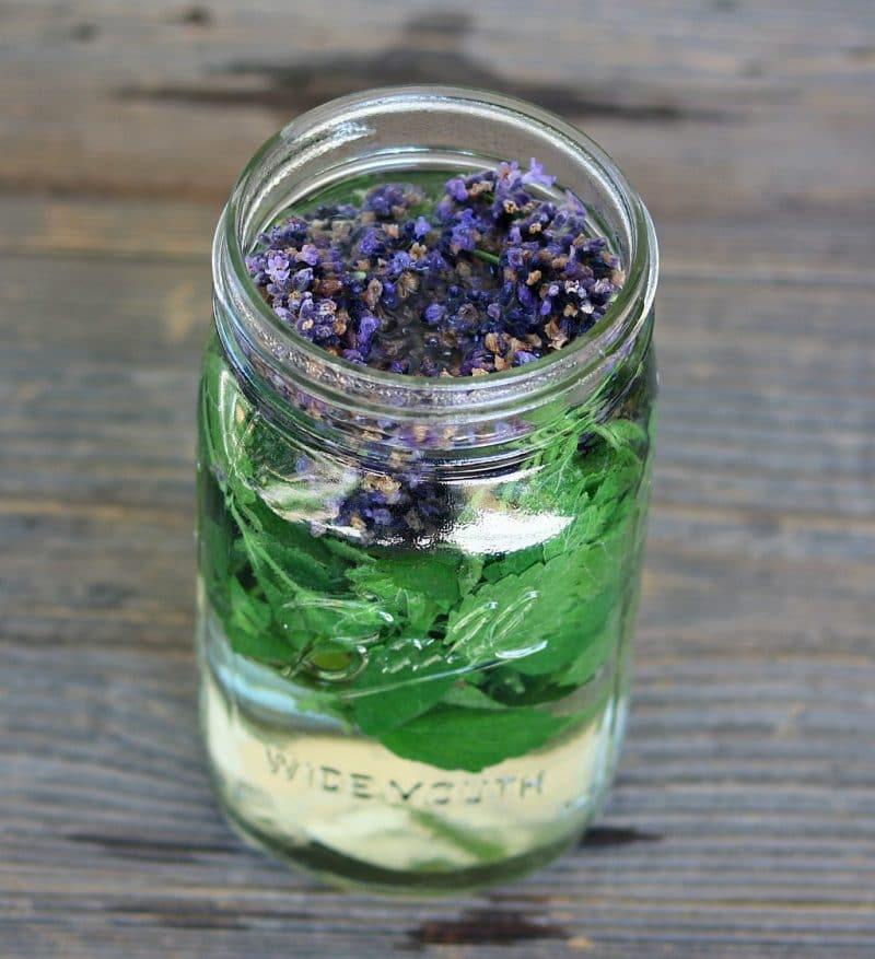 lavender and lemon balm tea steeping in a quart jar