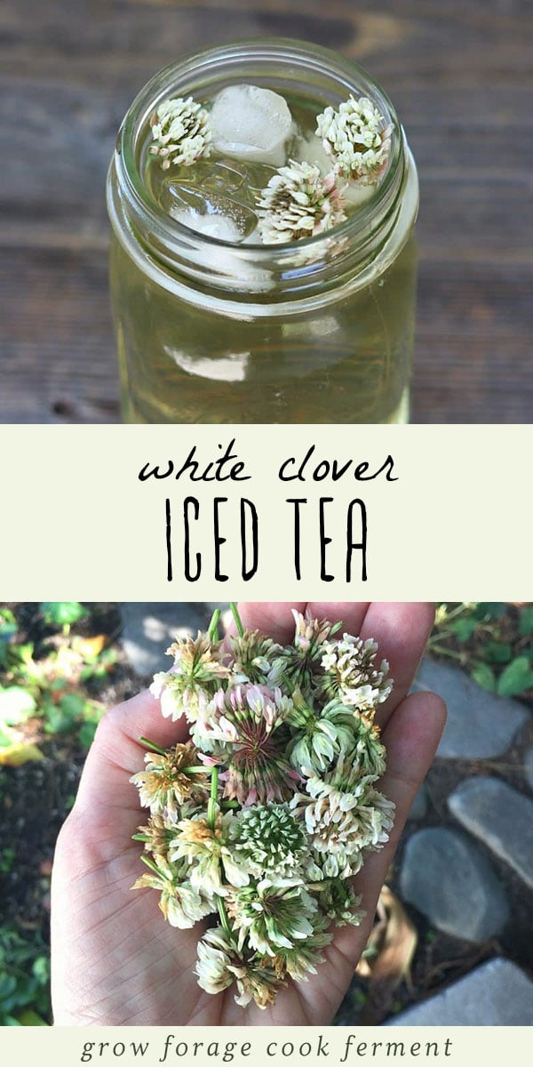 White clover iced tea is not only delicious, but is also high in vitamins and minerals. Learn how to make this tasty and refreshing foraged drink! #wildcrafting #herbalism