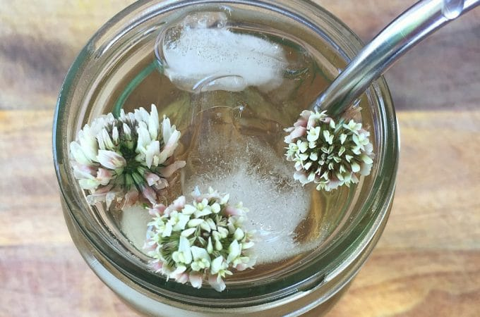 White Clover Iced Tea (recipe + uses)