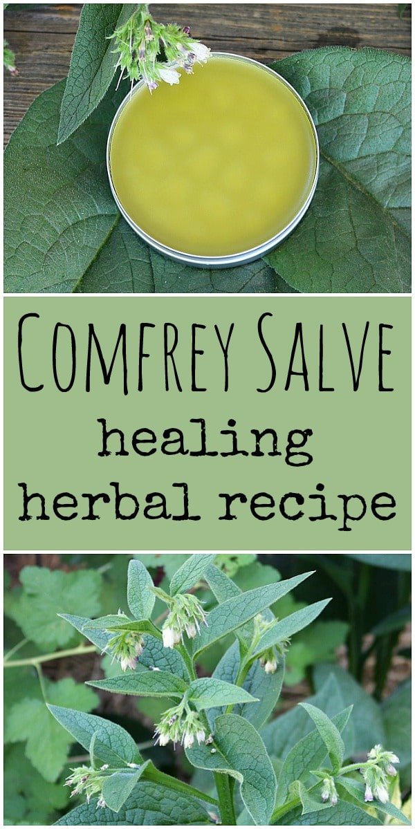 Learn how to make your own homemade healing comfrey salve. Comfrey has many medicinal benefits and is excellent for helping to heal minor wounds. #comfrey #salve #herbalism