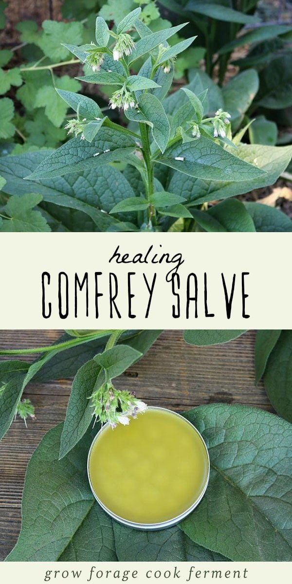 Learn how to make your own homemade healing comfrey salve. Comfrey has many medicinal benefits and is excellent for helping to heal minor wounds. #salve #herbalism