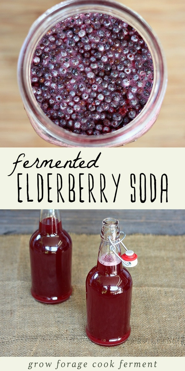 Fall is peak season for elderberries, and there are so many uses, both medicinal and culinary, for this versatile wild berry! One of my favorite recipes is this naturally fermented elderberry soda. It's full of vitamins and antioxidants and so wonderful for the immune system. Click through to learn how to make this easy and delicious fermented elderberry soda! #ferment #fermented #foraged #elderberries #soda #naturalsoda #immuneboosting #immunity #realfood