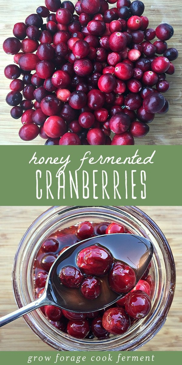 Learn how to make these honey fermented cranberries! They're a healthy, colorful, probiotic recipe that's perfect for your Thanksgiving or holiday dinner. Fermented honey cranberries are made from nourishing real food ingredients, and are a wonderful recipe for gut health and healing. You'll love these probiotic rich cranberries - they're certain to become a favorite fermented fall food recipe! #cranberries #probiotic #guthealth #realfood #ferment #fermented #thanksgiving