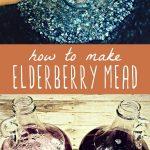 Elderberries in a pot and two glass gallon jugs of elderberry mead.