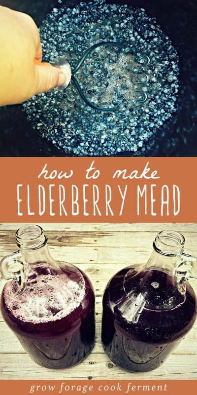 Elderberries in a pot and two glass gallon jugs of elderberry mead.
