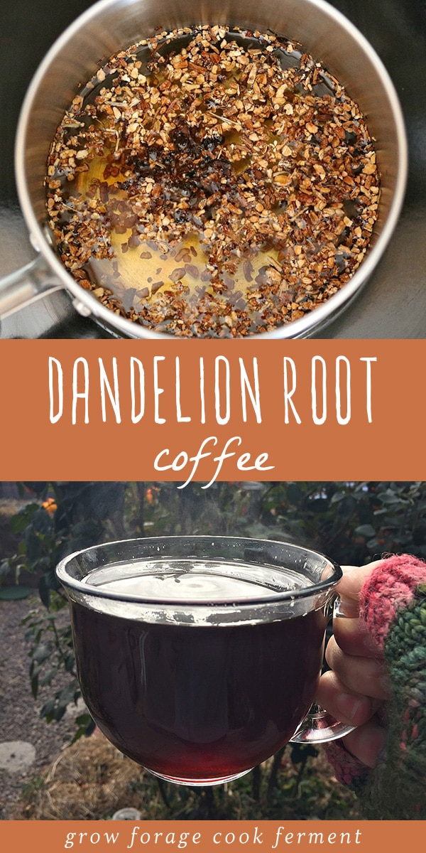 Fall is the perfect time of year to go foraging for dandelion and chicory so that you can make this delicious roasted dandelion root coffee! This foraged food recipe is so easy to make, and yes, dandelion root coffee really does taste just like regular coffee! This is perfect if you're trying to avoid caffeine or would like to experience the herbal and medicinal benefits of dandelion or chicory root. #dandelion #dandelionroot #chicory #coffee #traditionalfood #foraged #wildcrafting #herbalism