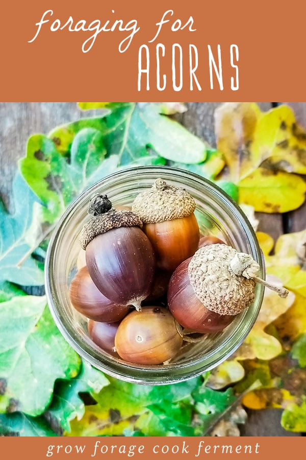 a mason jar full of foraged acorns