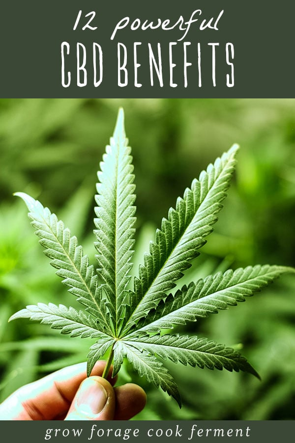 a hand holding a cannabis leaf