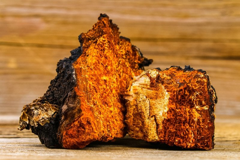 two large pieces of chaga fungus