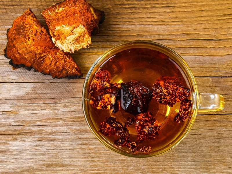 chaga tea with chunks of chaga fungus