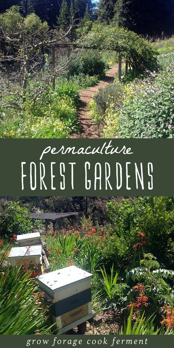 Forest gardens are the best, most hands off way to grow your own food. They are beautiful too! Learn about guilds and food forests in this permaculture 101 series. #permaculture #gardening #forestgarden #foodforest
