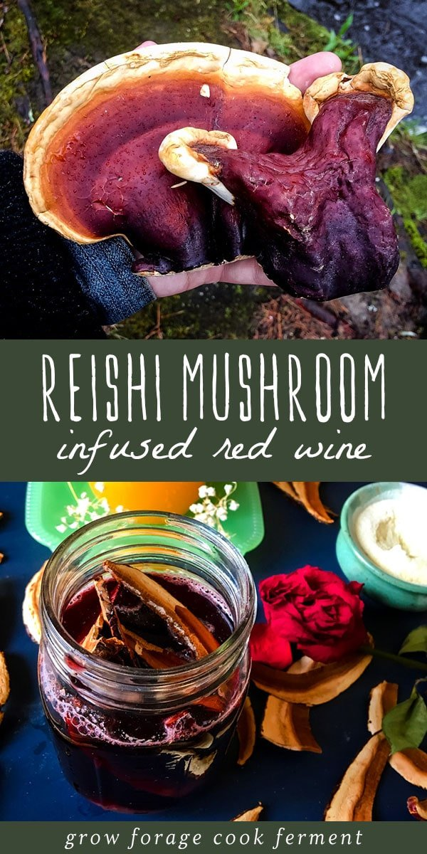 Make this reishi mushroom infused red wine for a delicious and relaxing drink! This cordial also contains rose hips and the adaptogen herb ashwagandha. This herbal wine is good for the immune system! #reishi #mushroom #infused #wine #cordial