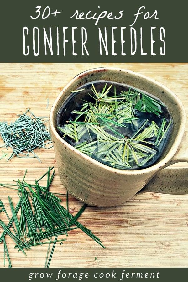a mug of conifer needle tea