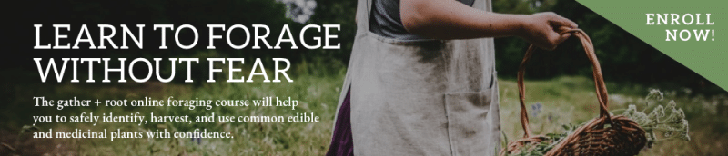Gather and Root Foraging Course