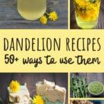 Dandelions Recipes
