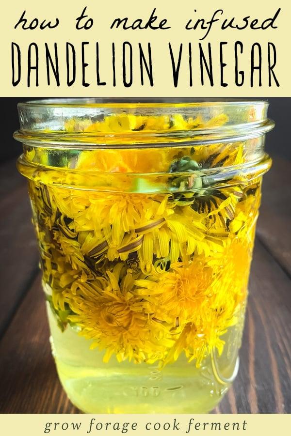 dandelion flowers infusing in vinegar