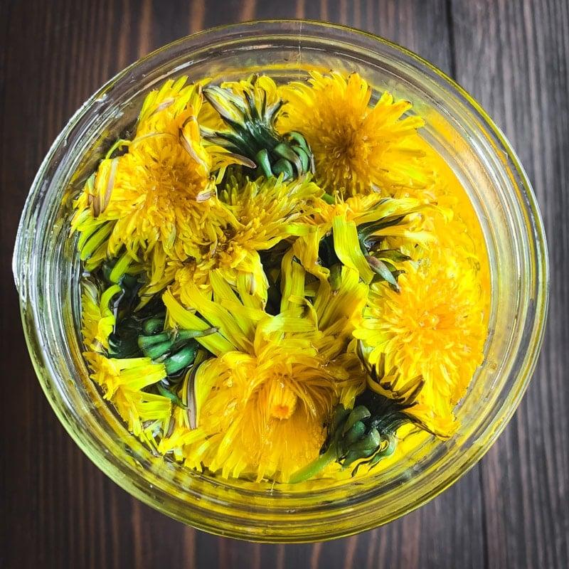 top view of dandelion flowers infusing in vinegar