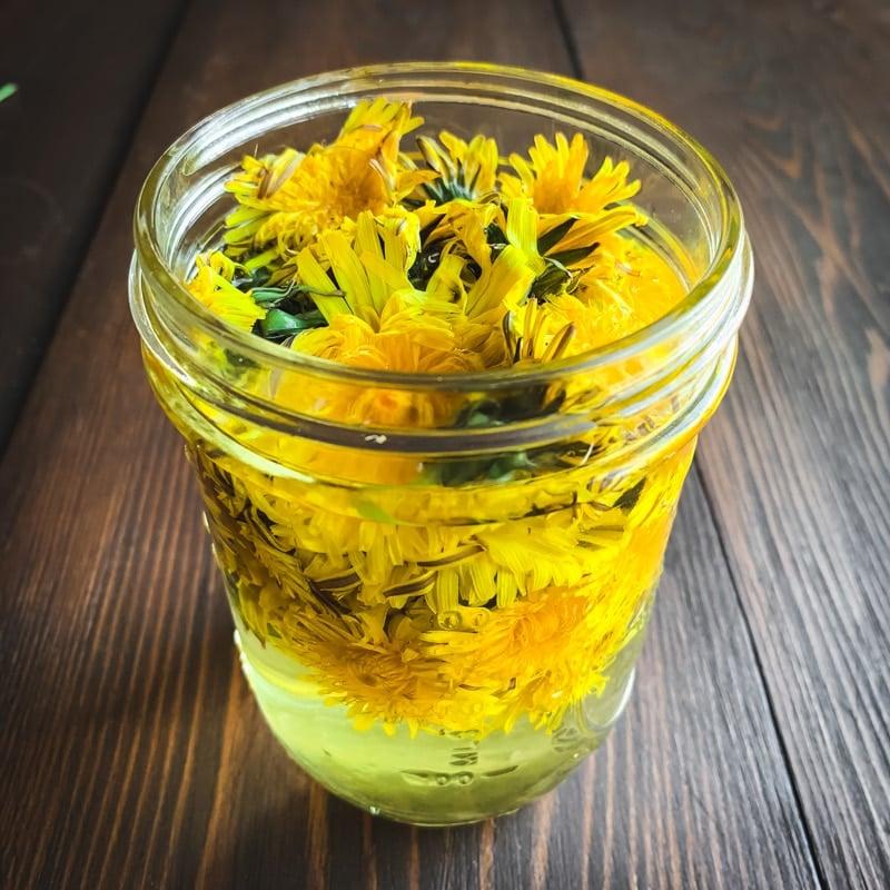 dandelions infusing in vinegar