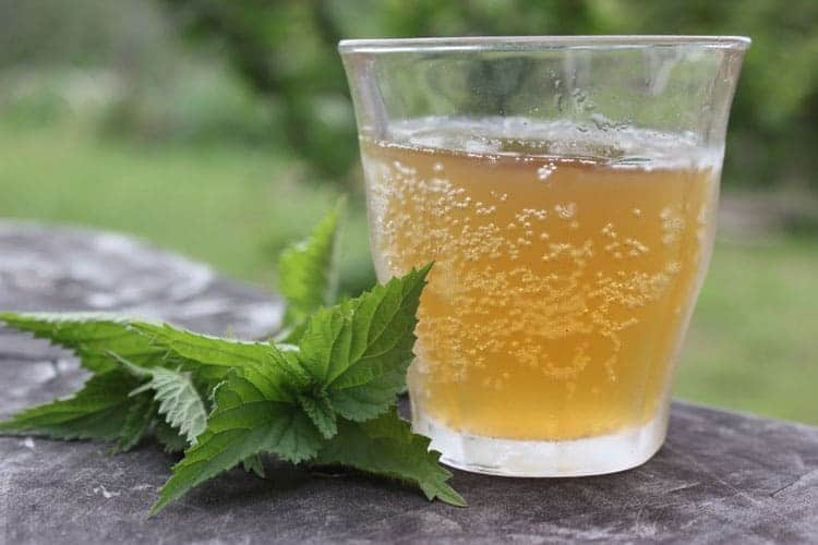 a glass of nettle beer