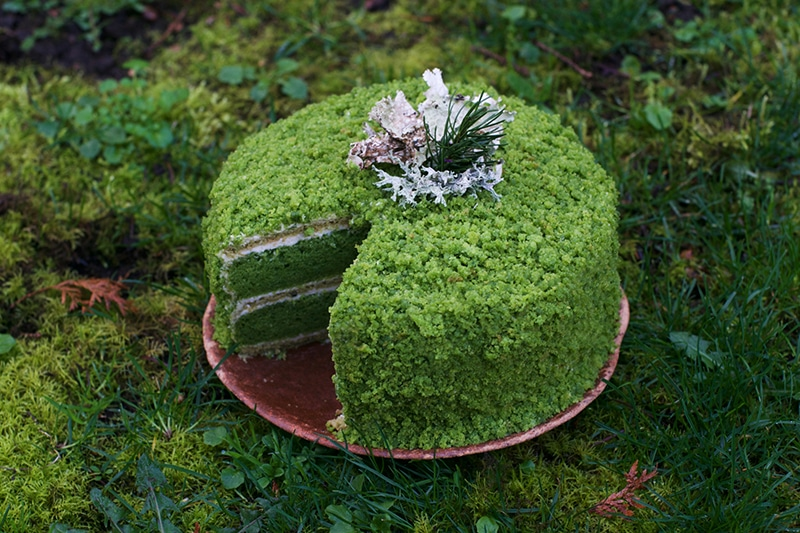 nettle cake with moss icing