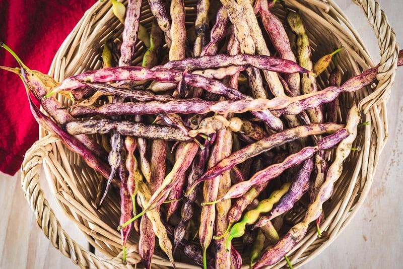 a basket of mesquite pods