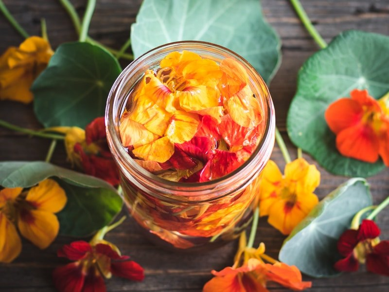 nasturtium flowers in vinegar