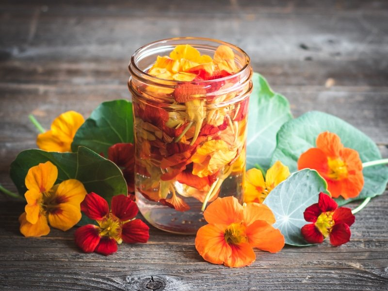 nasturtium flowers infusing in vinegar