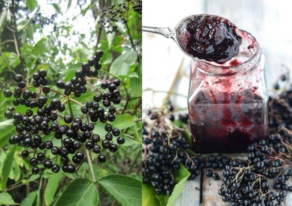 Elderberry Recipes: Elderberry Chutney