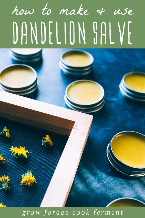 dandelions on a screen and dandelion salve