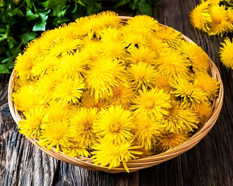 a basket full of dandelion flowers
