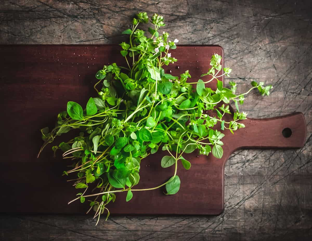 fresh oregano plant on a cutting board