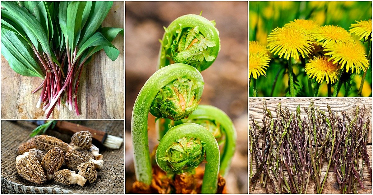 a collage of ramps, morels, fiddleheads, dandelions, and asparagus