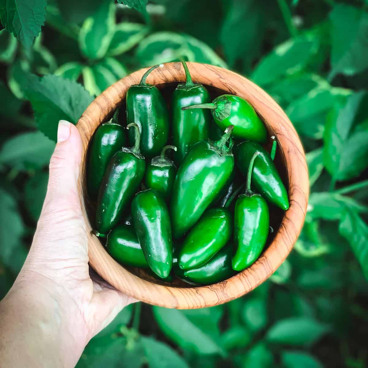 a hand holding a wooden bowl full of fresh jalapenos