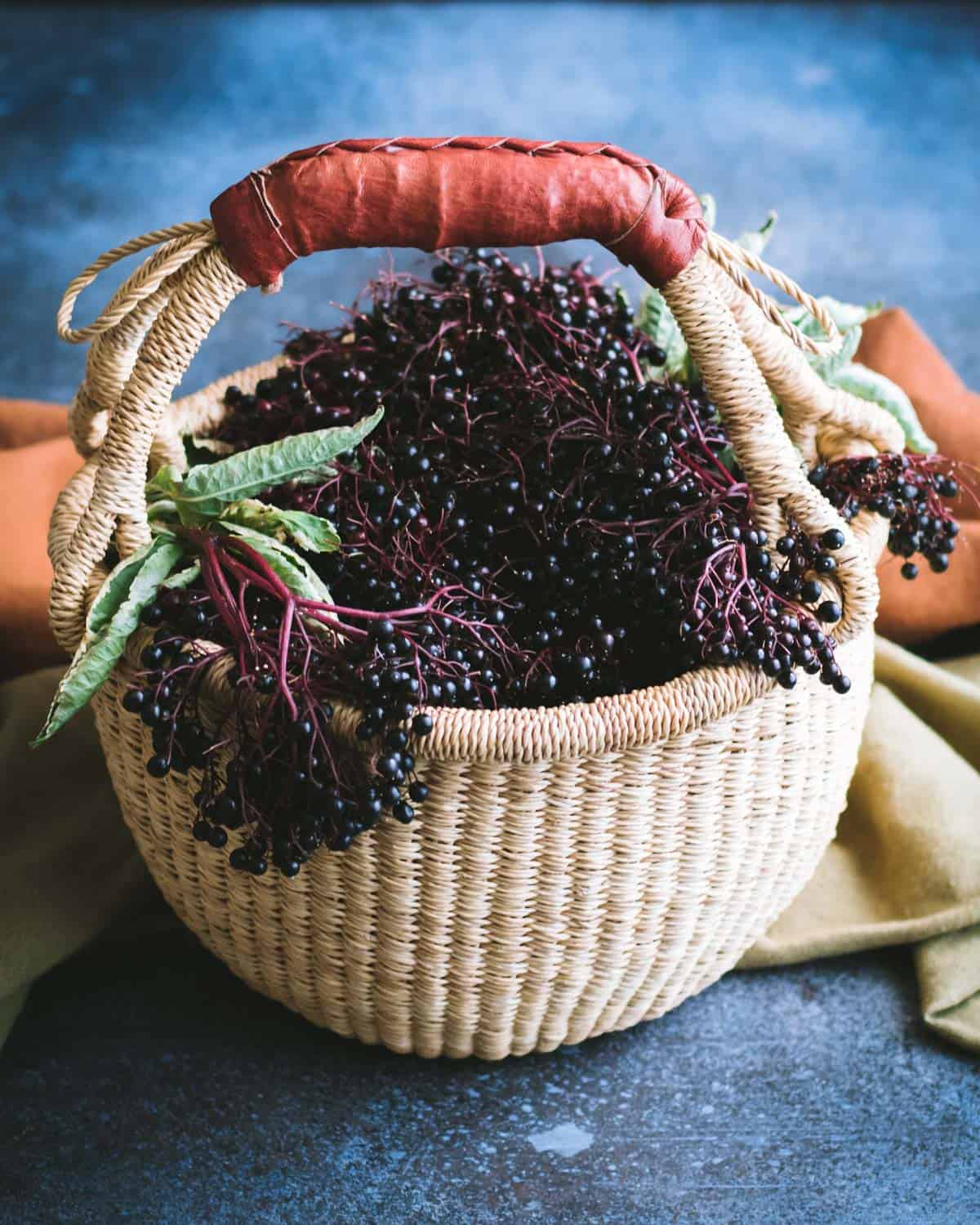 foraging basket filled with elderberries