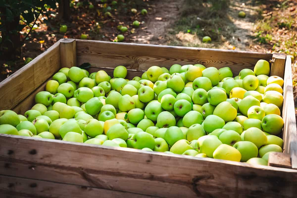 a large wooden crate full of green apples