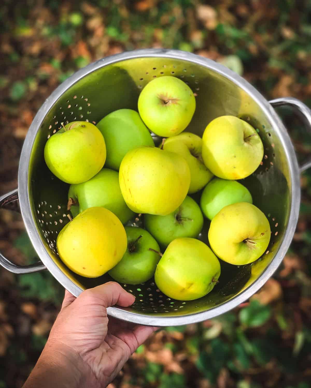 a colandar full of green apples