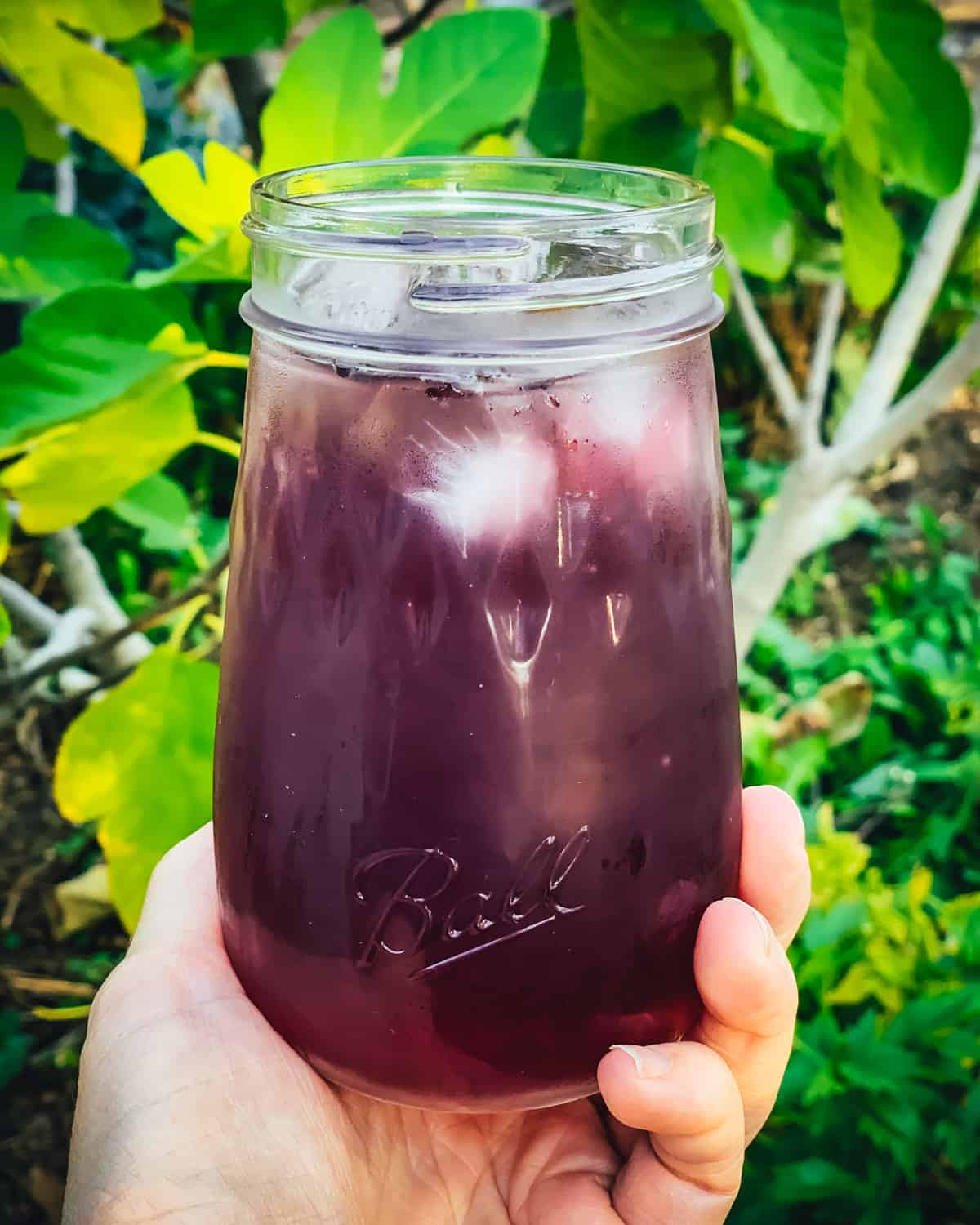 a hand holding elderberry cocktail in a ball flute jar