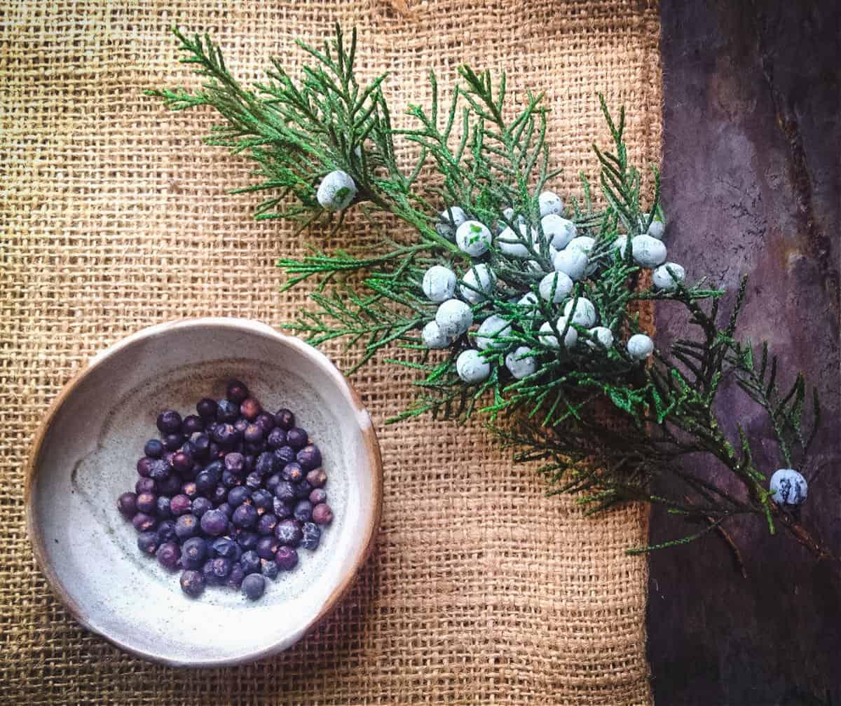 fresh and dried juniper berries