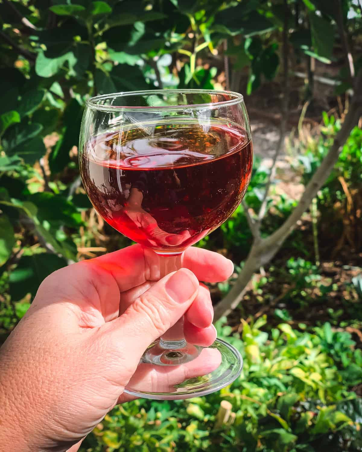 a hand holding a glass of pomegranate wine