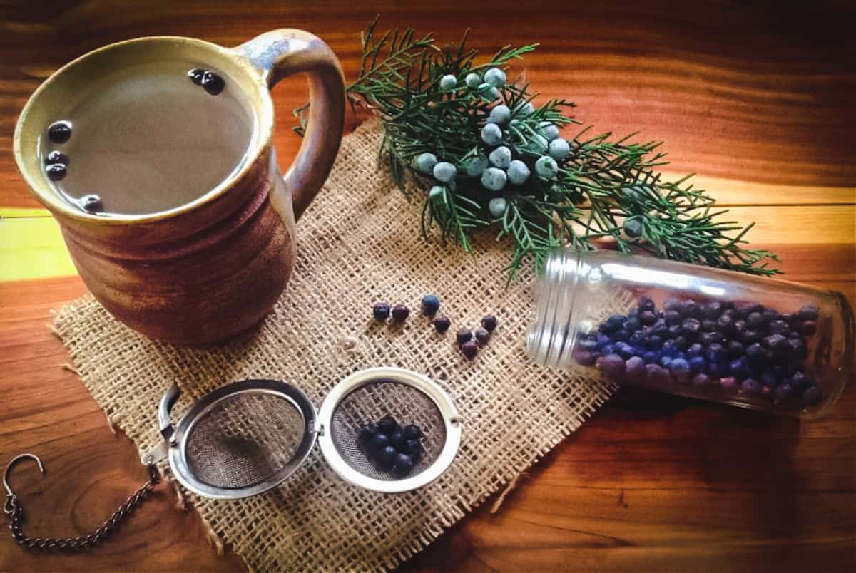 a mug of juniper tea with fresh and dried juniper berries