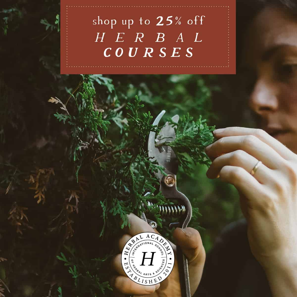 herbal academy holiday sale 25% off