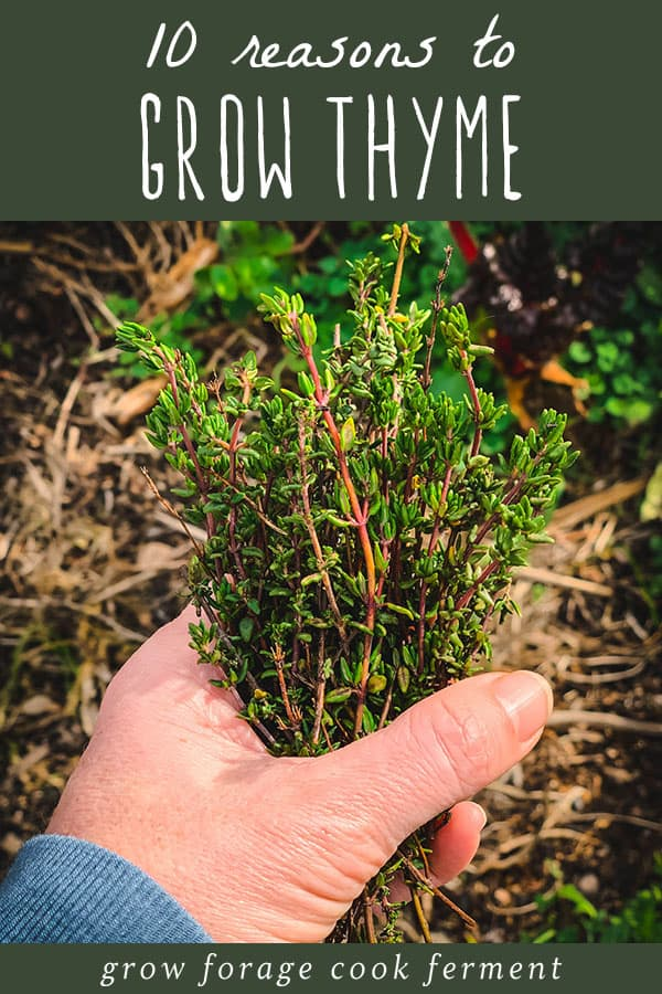 a hand holding a bunch of thyme