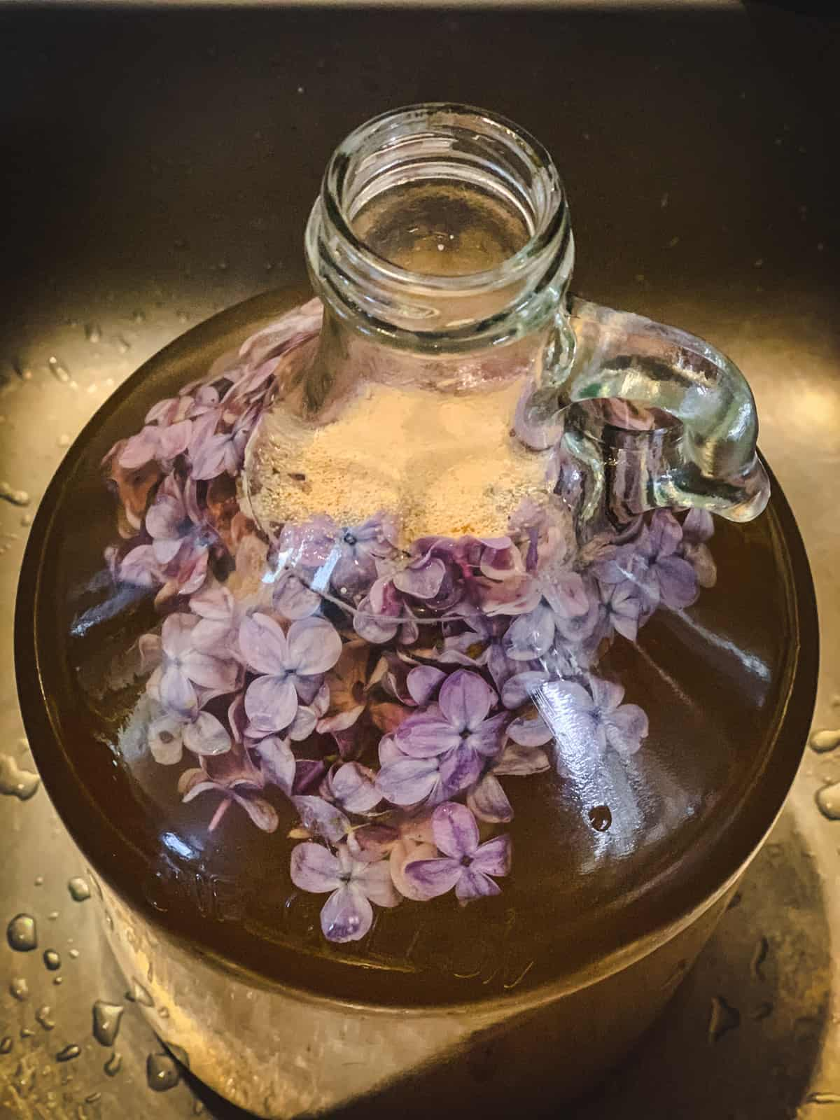 wine yeast on top of the lilac mead must