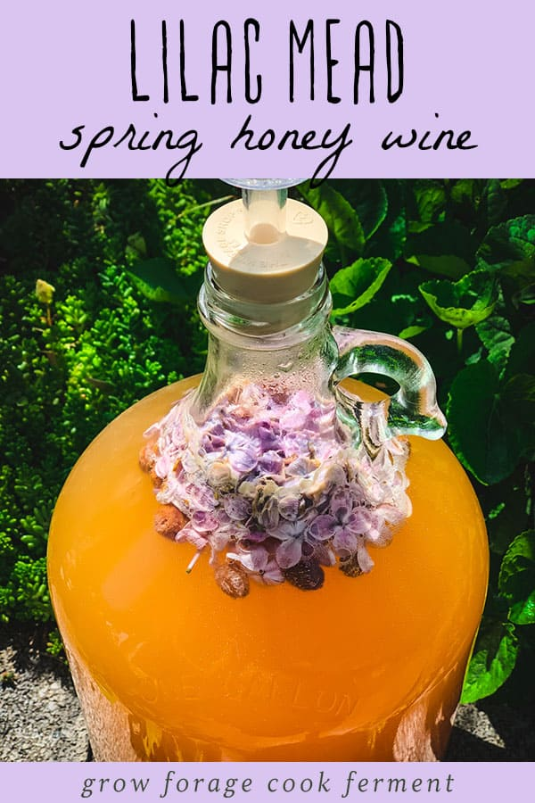 a one gallon jug of lilac mead fermenting